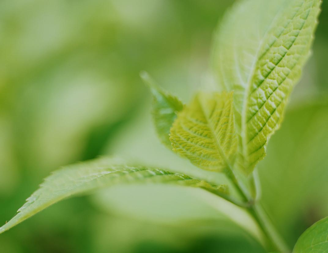 株式会社ワンソリューション 求人募集イメージ「新緑」